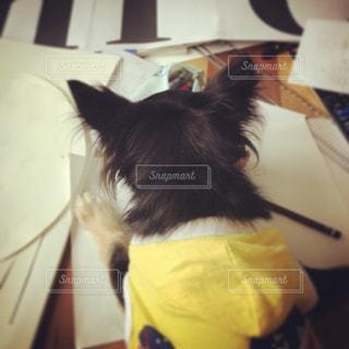 犬 - No.336602