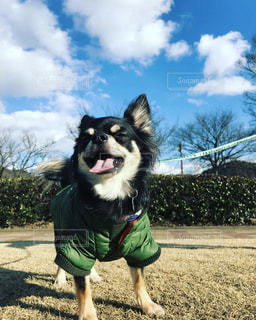 犬 - No.339597