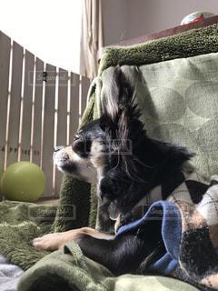 犬の写真・画像素材[346606]