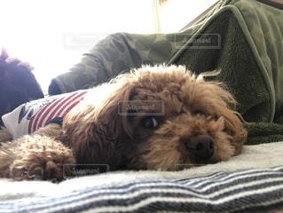 犬の写真・画像素材[364070]