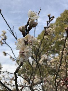 春 - No.380010