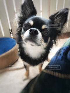 No.395308 犬