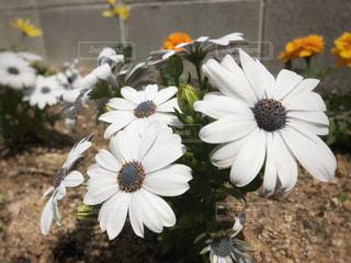 花の写真・画像素材[432824]