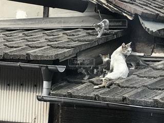 猫 - No.558587