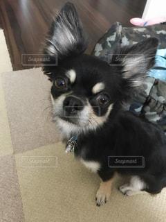 犬の写真・画像素材[578985]