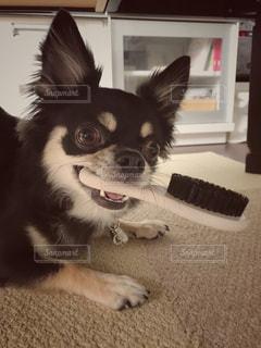 犬の写真・画像素材[664041]