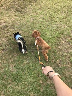草の上に横になっている犬にはフィールドが覆われています。 - No.705222