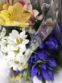 お花たちの写真・画像素材[759193]