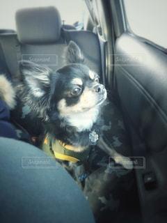 車の座席に座っている犬 - No.1011512