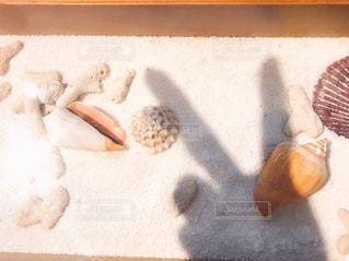 貝とピースシルエットの写真・画像素材[1361545]