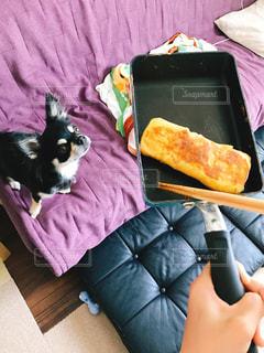 いい匂い、くれるのか期待する犬の写真・画像素材[1447804]