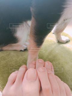 私と愛犬の足の写真・画像素材[1447806]