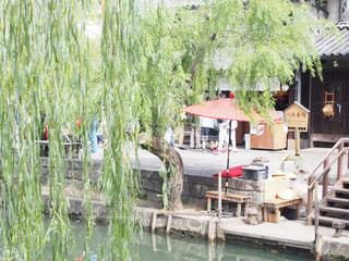 美観地区、川舟の乗場の写真・画像素材[1536594]
