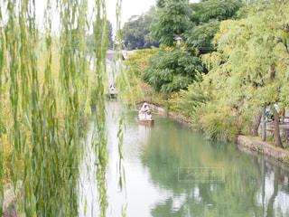 美観地区の倉敷川の川舟の写真・画像素材[1536607]