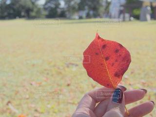 紅葉した落ち葉を持つ女性の写真・画像素材[1570859]