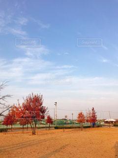 公園の芝生と空の写真・画像素材[1653453]