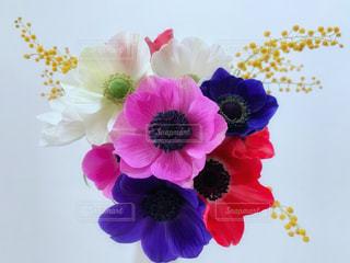 可愛いアネモネの花束の写真・画像素材[1741770]