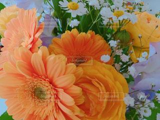 ビタミンカラーの花たちの写真・画像素材[1856408]