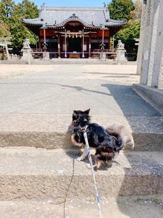 愛犬自ら参拝の写真・画像素材[2044265]