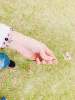 クローバーの花の写真・画像素材[2137957]
