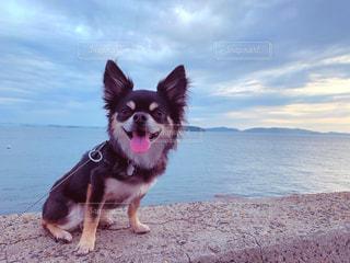 堤防に座る愛犬の写真・画像素材[2187796]
