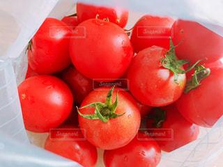 採れたてトマトの写真・画像素材[2196768]