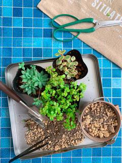 多肉植物を植えるの写真・画像素材[2251178]