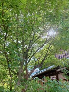 古民家に木漏れ日がの写真・画像素材[2405203]