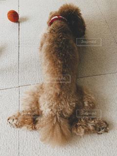 タイル張りの床に座っている犬の写真・画像素材[2430323]