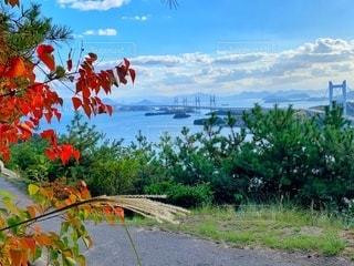 紅葉と瀬戸大橋の写真・画像素材[2698374]
