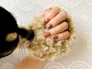 キャットヤーンと愛犬とネイルした手の写真・画像素材[2764214]