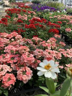 カラフルな花たちの写真・画像素材[3229460]