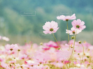 No.258020 花