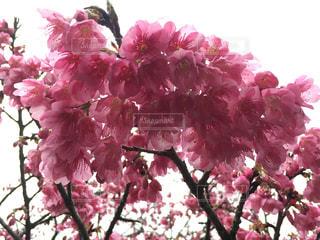 近くの植物にピンクの花のアップの写真・画像素材[971887]