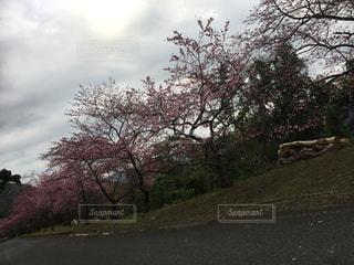 道の端に木 - No.971899