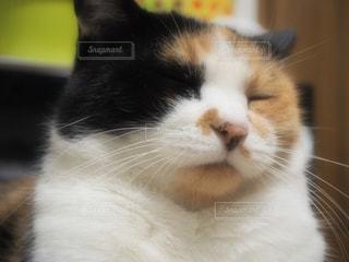 猫 - No.267417