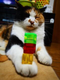 猫 - No.267419