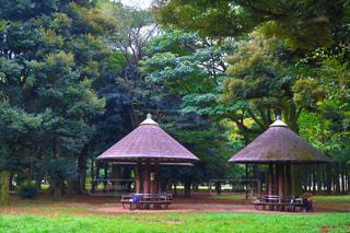 代々木公園の写真・画像素材[259601]