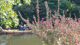 近くの花のアップの写真・画像素材[934260]