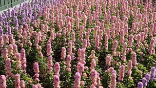鮮やかなお花畑の写真・画像素材[934263]