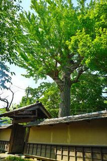 日本の風景 - No.1000955