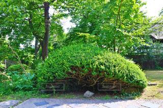 日本の庭の写真・画像素材[1000963]