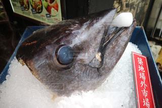 魚の頭の写真・画像素材[1002344]