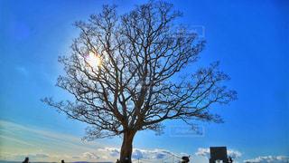 大きな木 - No.1013385