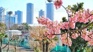 都会の中の桜の写真・画像素材[1057575]