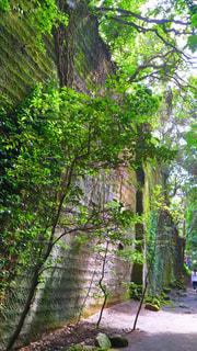 フォレスト内のツリーの写真・画像素材[1356487]
