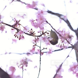自然の写真・画像素材[5886]