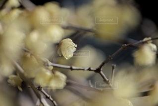 自然の写真・画像素材[5881]