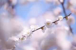 自然の写真・画像素材[5877]