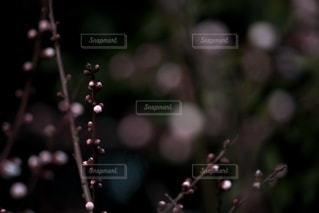 風景の写真・画像素材[5875]